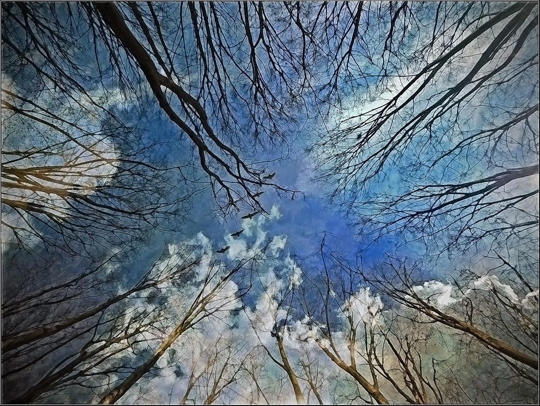 Šumske impresije