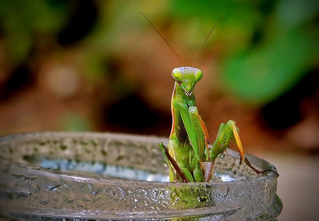 Ne bleni u moje grudi(idiote)! Jel ne vidiš da se kupam?!