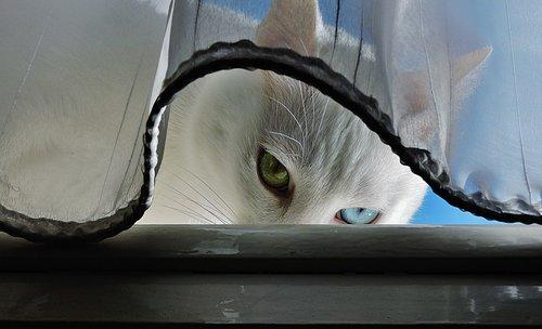 Tosho Čuvaj se mačka !