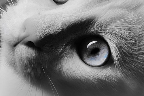 Tosho Oko moje plavo