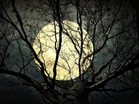 Tosho Super Moon