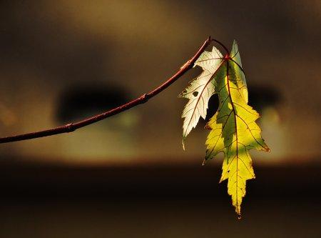 Tosho Jesenja