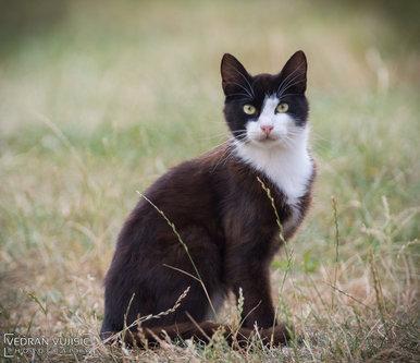 VedranMNE Mačka