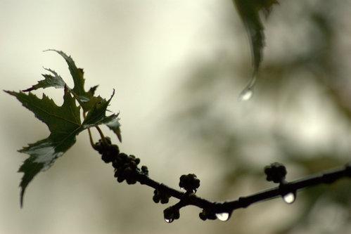 VuckoBre Microdroplets forest