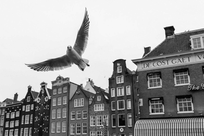 Pozdrav iz Amsterdama