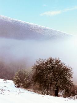 Zmajce Zimska idila Suve planine.JPG