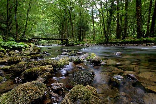 amy15 u šumi