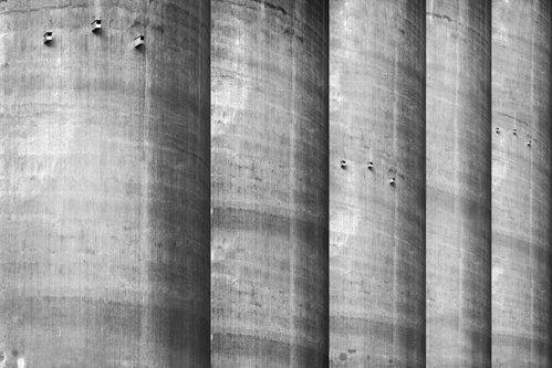 anaumceski concrete forest