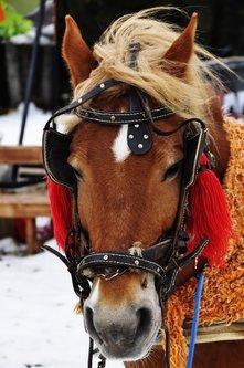 andreotti Konj
