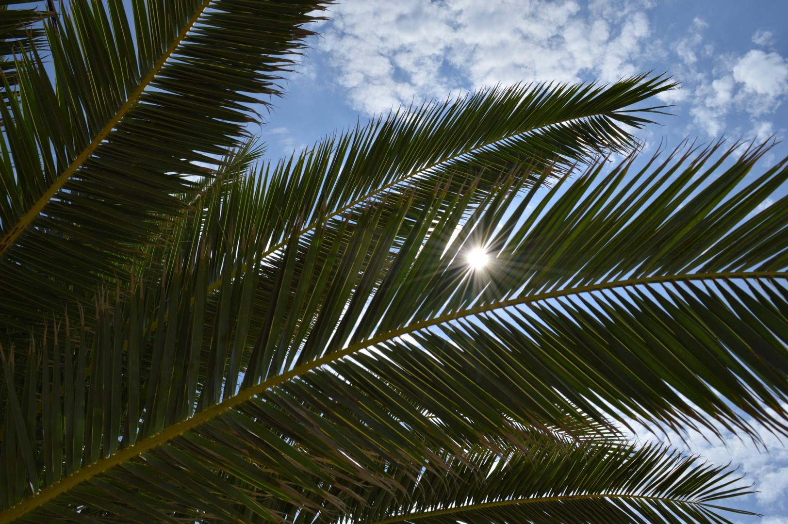 Palma i zraci sunca