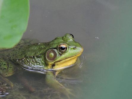 blamir Mala zelena