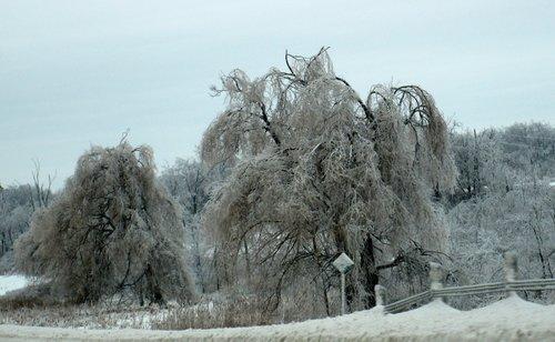 blamir Zima
