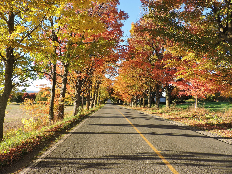 Boje jeseni