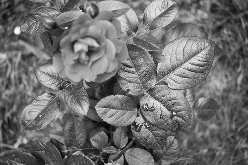 boki73 Jedan fotografski eksperiment.