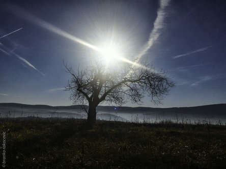 branco987 Suncano drvo