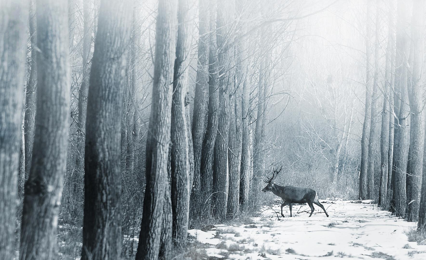 čudna šuma je to....