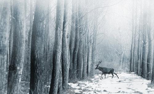 burki čudna šuma je to....