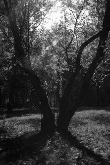 bvelickovic Čarobno drvo