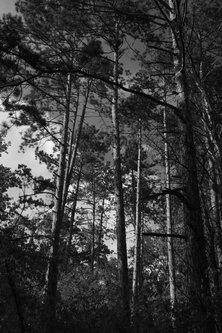 bvelickovic Šuma