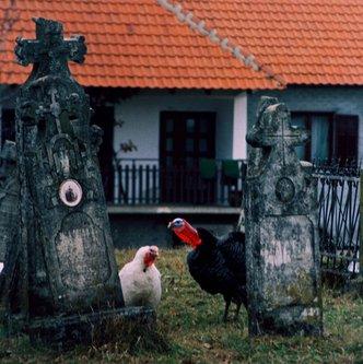 bvelickovic Voijničko groblje Baćevac