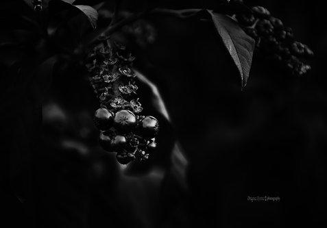 bygilles plodovi...