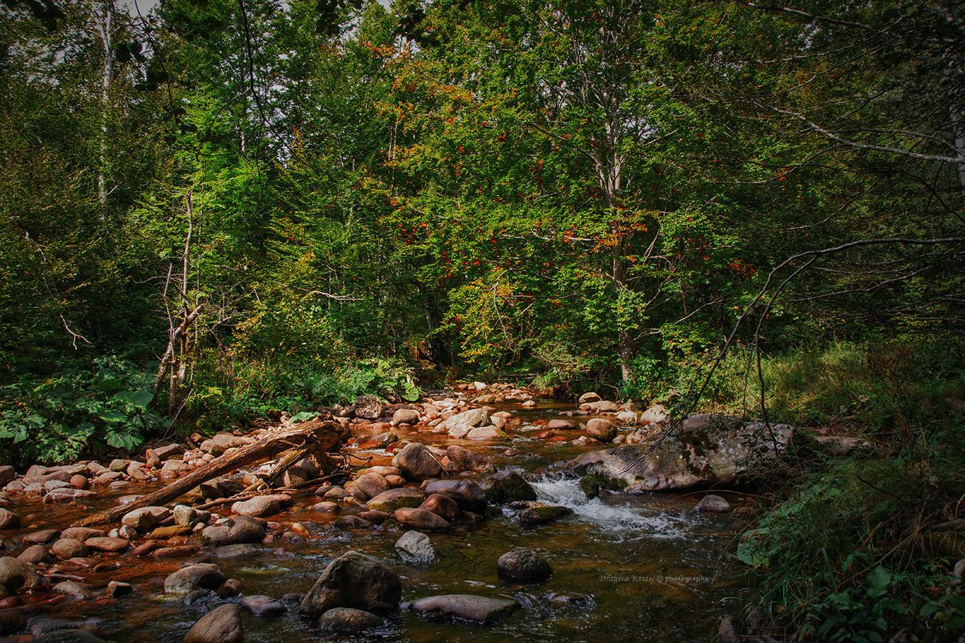 Drvlje & kamenje
