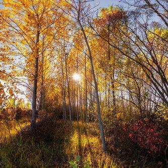 bygilles Svetlosna jesen