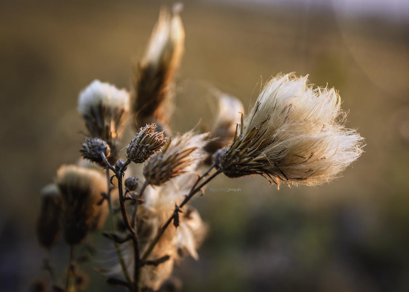 Jesenje niti
