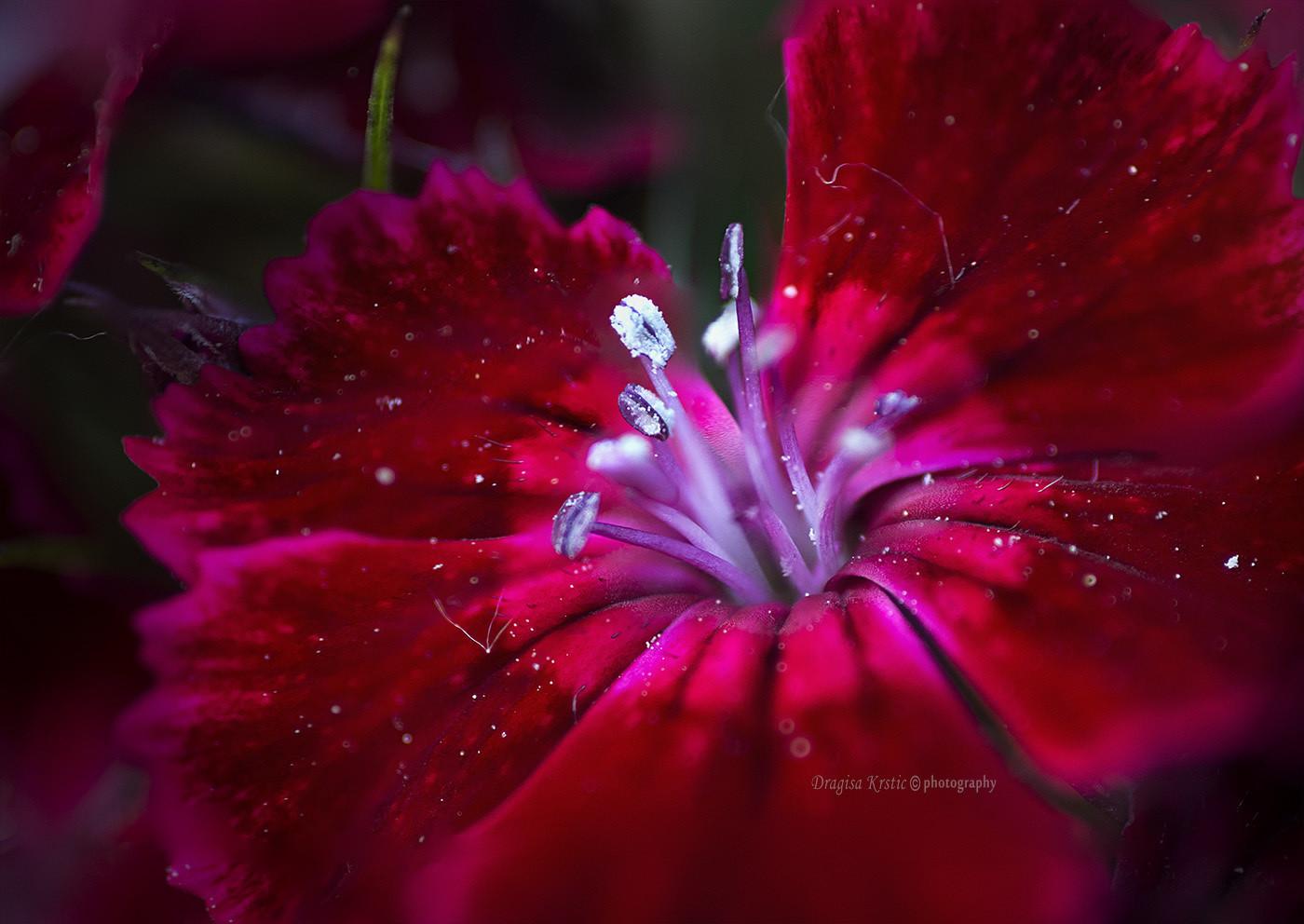Prolećne radosti