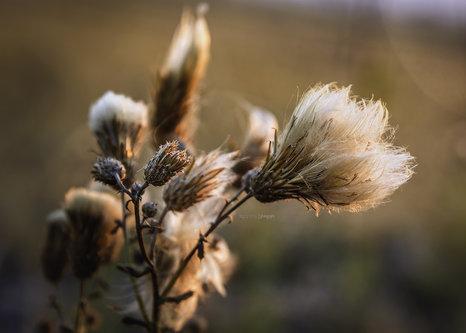bygilles Jesenje niti