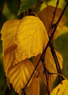 bygilles breza