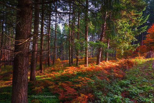 bygilles ivica šume
