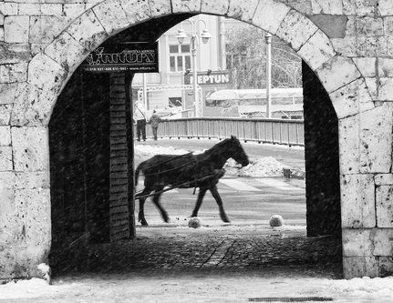 coa75 Black horse