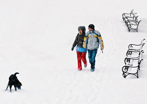 coa75 Snowblind