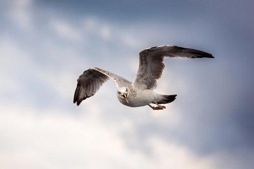 dalibort82 Angry Bird
