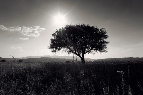 dalibort82 Usamljeno drvo