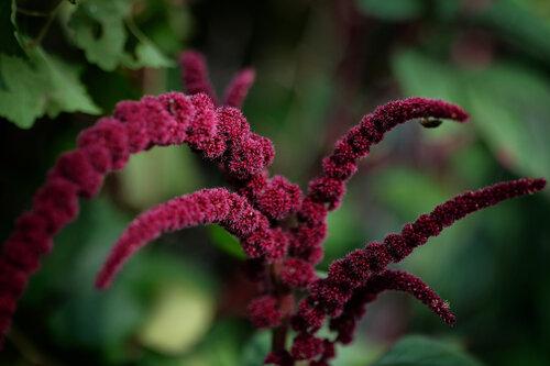 dalibort82 Blumen