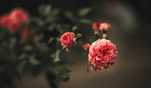 dalibort82 Cvetuljak