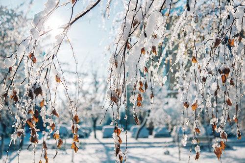 dalibort82 Prelepo Zimsko Jutro