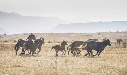 damirgavranovic Konji