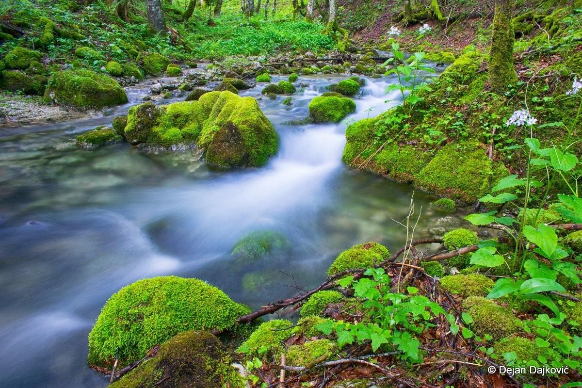 Rijeka Sušica