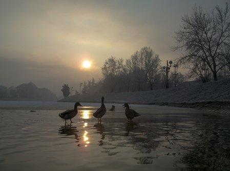 djLeki 4 patke i čizma