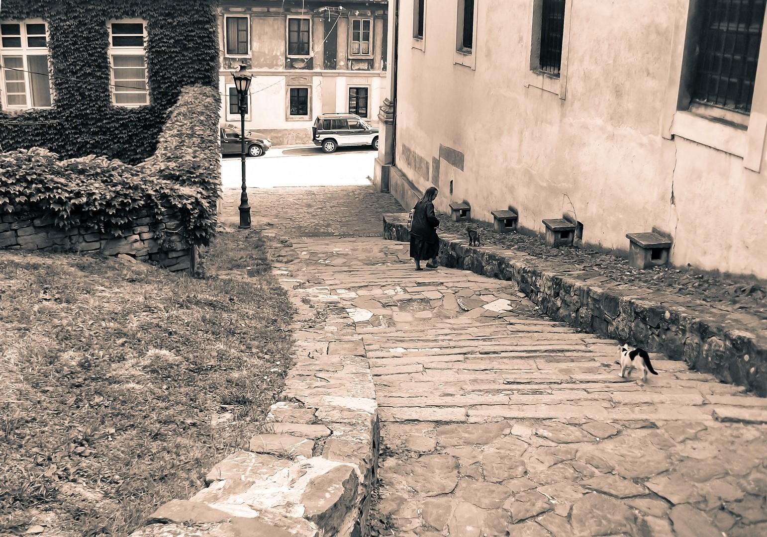 mačke na Petrovaradinu