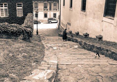 djLeki mačke na Petrovaradinu
