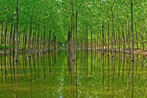 djaniru Čudna šuma