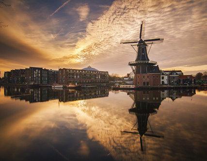 djolum Haarlem mill