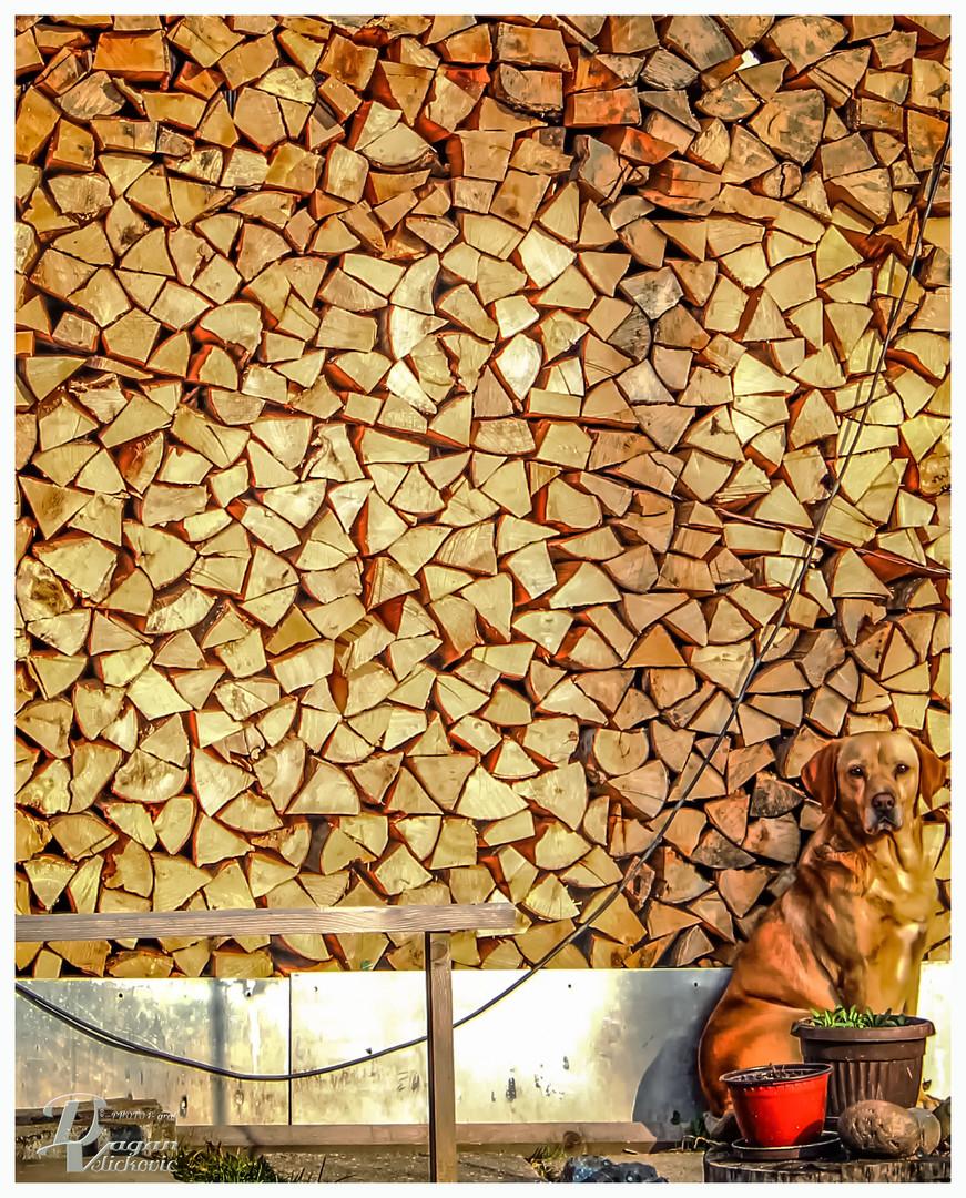 čuvar drva u zimskom periodu
