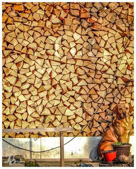dragan čuvar drva u zimskom periodu