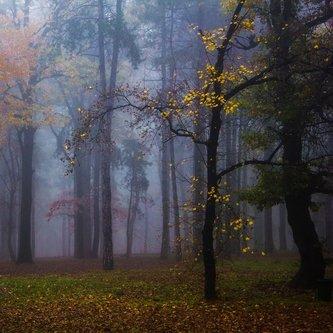 dragan šuma