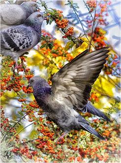 dragan ptice